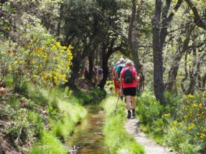 Hiking in forest trail 4 - Xplore Portugal